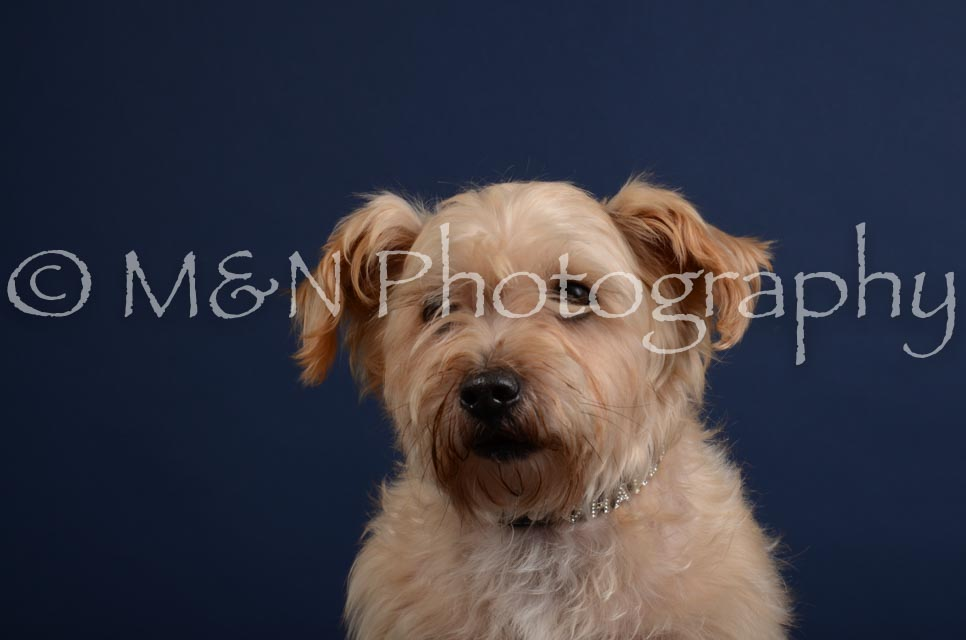 M&N Photography -DSC_3856