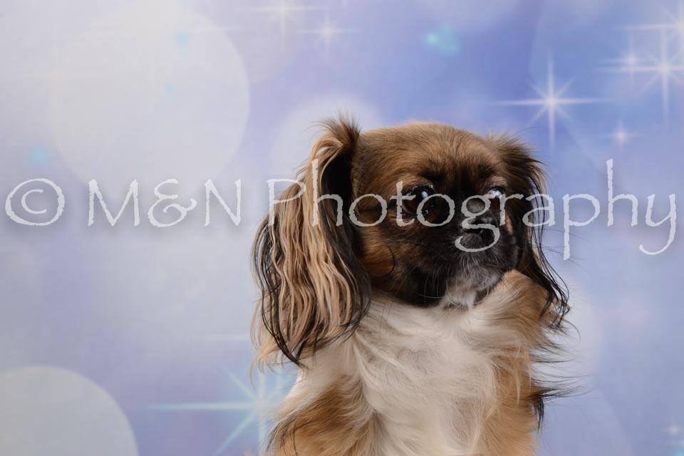 M&N Photography -DSC_6689