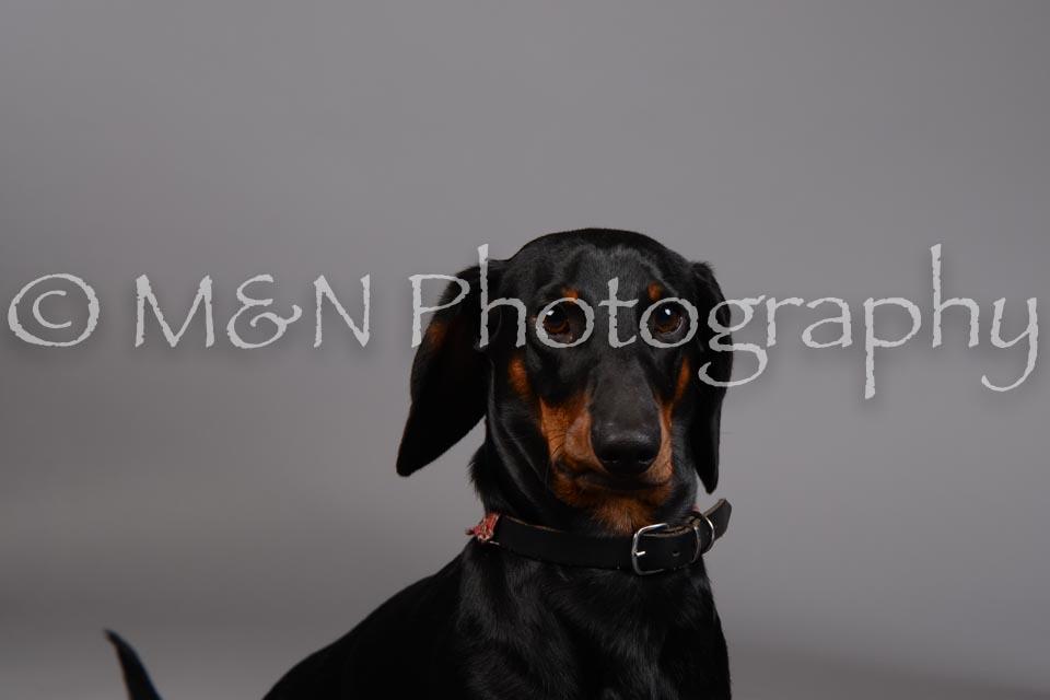 M&N Photography -DSC_1524