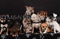 M&N Photography -DSC_5550