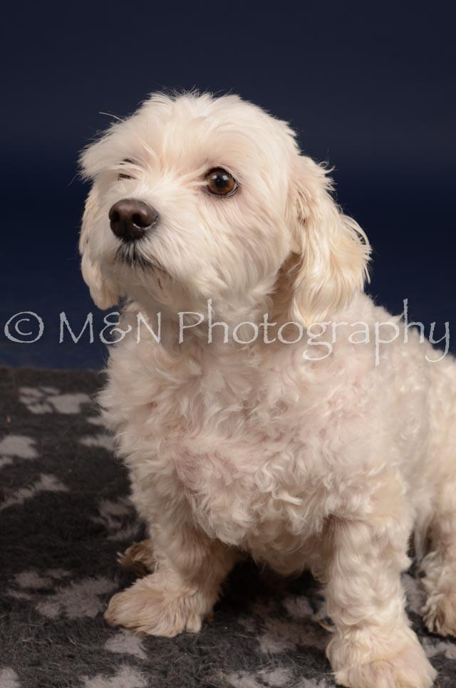 M&N Photography -DSC_0392