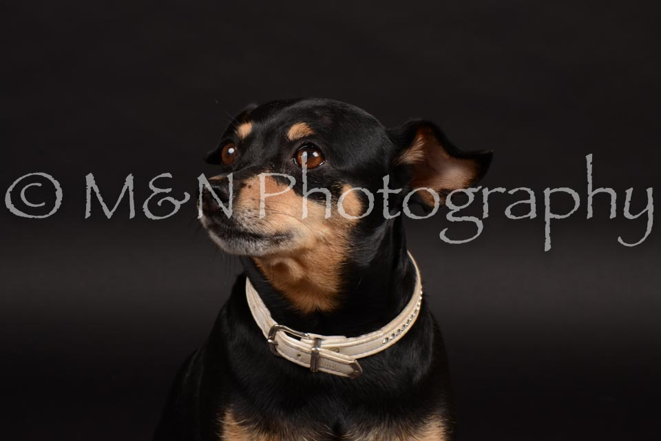 M&N Photography -DSC_9654