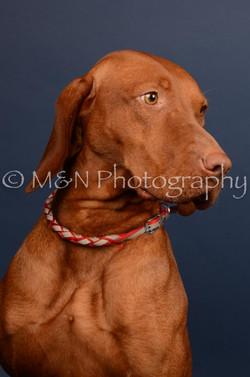 M&N Photography -DSC_4536