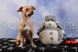 M&N Photography -DSC_6747