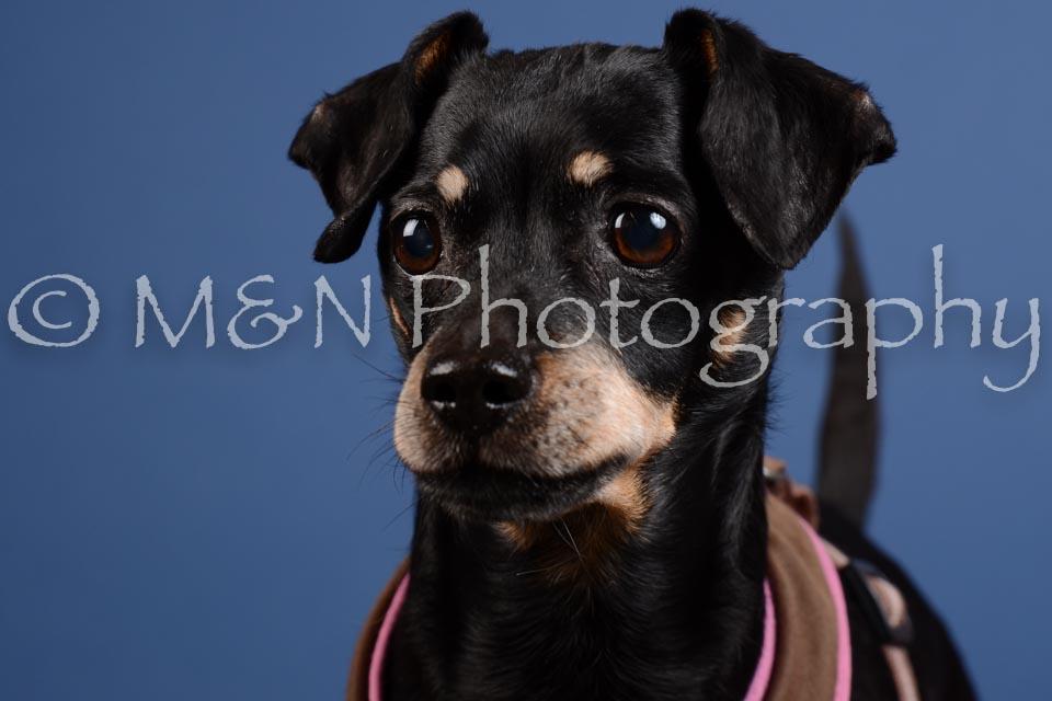 M&N Photography -DSC_5241
