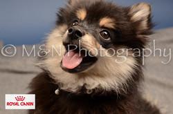 M&N Photography -DSC_4360-2