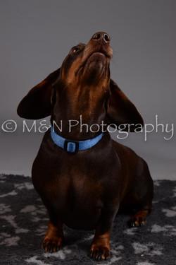 M&N Photography -DSC_2013