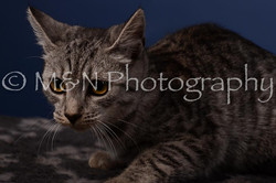 M&N Photography -DSC_4266