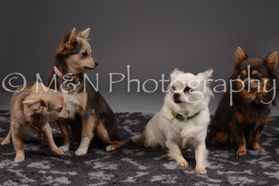 M&N Photography -DSC_2246-2