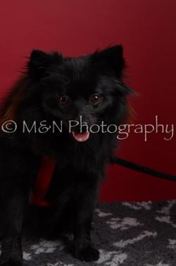 M&N Photography -DSC_3118