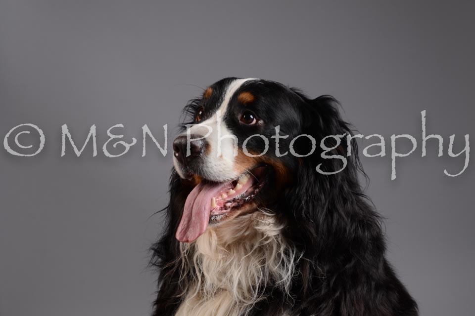 M&N Photography -DSC_1486