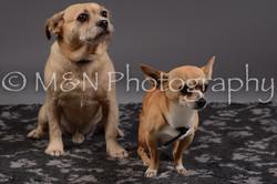 M&N Photography -DSC_2174