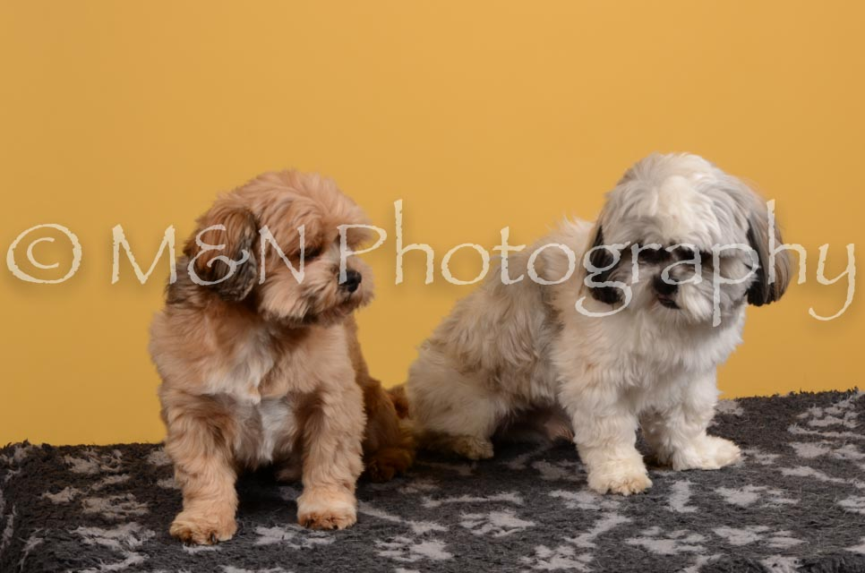 M&N Photography -DSC_4689