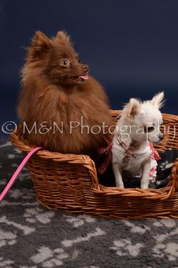 M&N Photography -DSC_0445