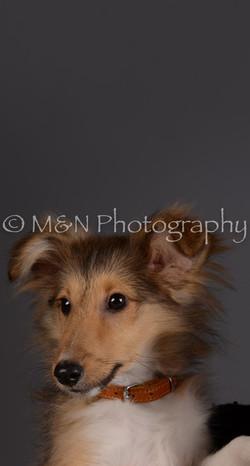 M&N Photography -DSC_2291