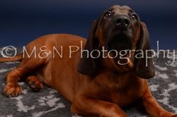M&N Photography -DSC_0256