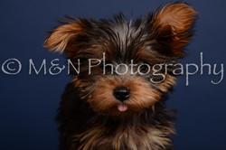 M&N Photography -DSC_4343