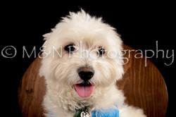 M&N Photography -DSC_9797