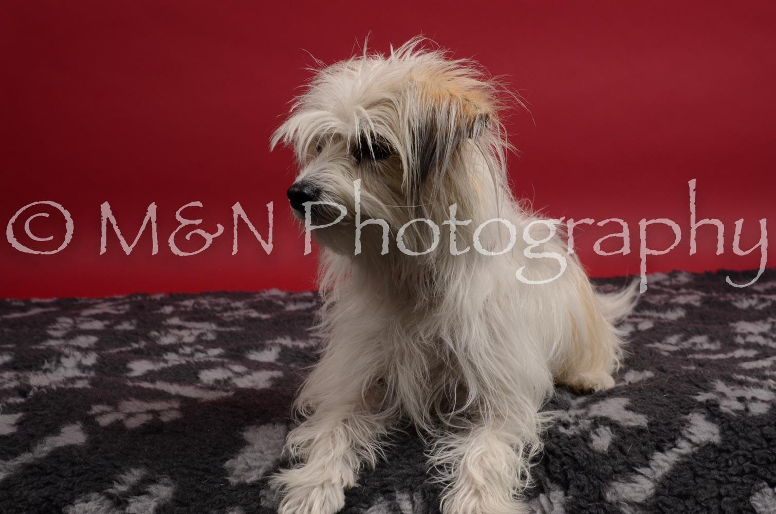 M&N Photography -DSC_8389