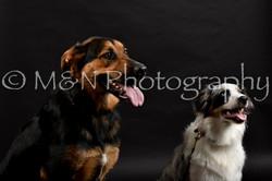 M&N Photography -DSC_2470