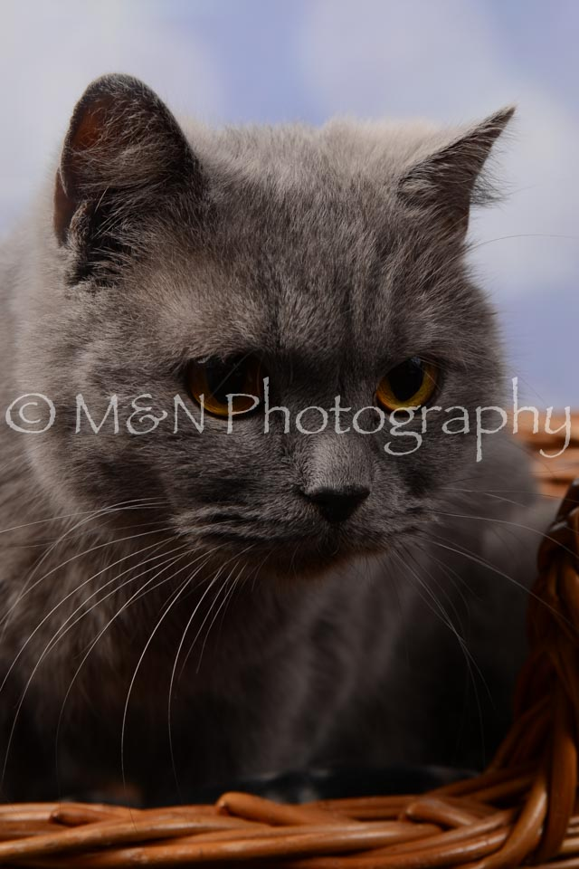 M&N Photography -DSC_6981
