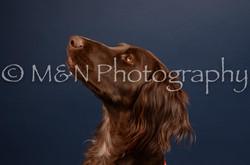 M&N Photography -DSC_4525
