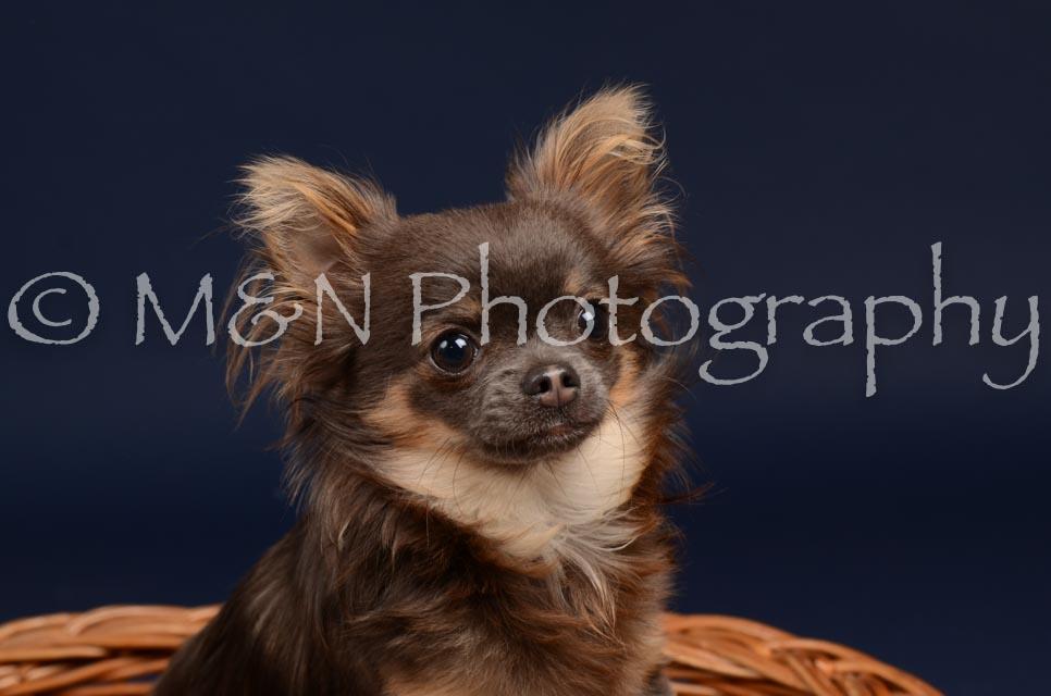 M&N Photography -DSC_0353