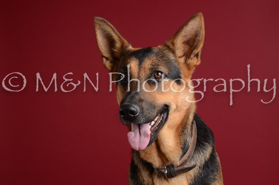 M&N Photography -DSC_3764