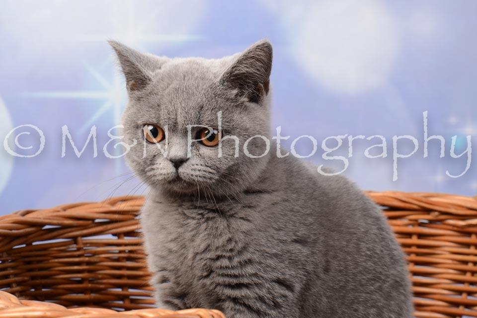 M&N Photography -DSC_7016
