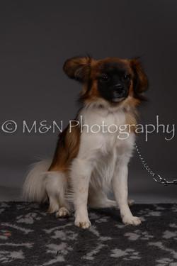M&N Photography -DSC_2296