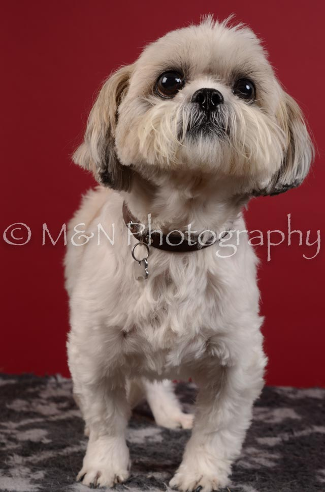 M&N Photography -DSC_3541