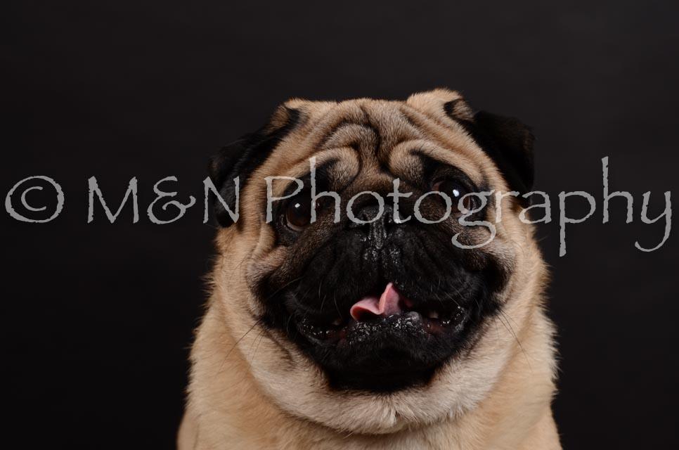 M&N Photography -DSC_5977