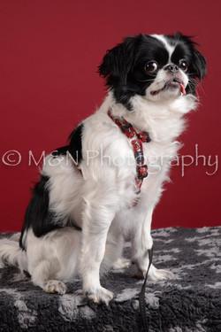 M&N Photography -DSC_3026