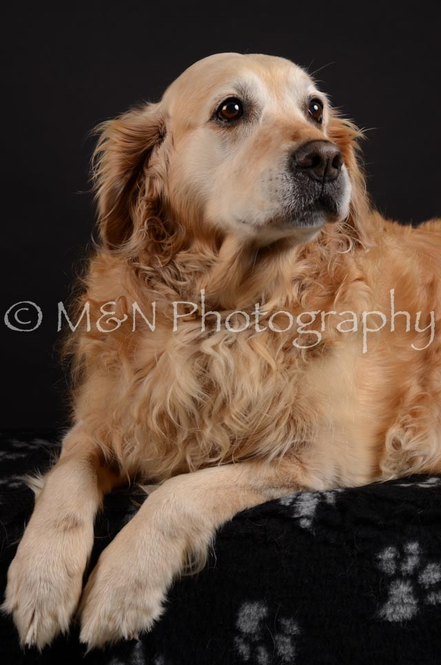 M&N Photography -DSC_5494