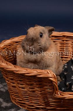 M&N Photography -DSC_0767