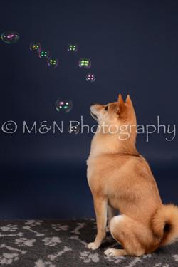 M&N Photography -DSC_0374