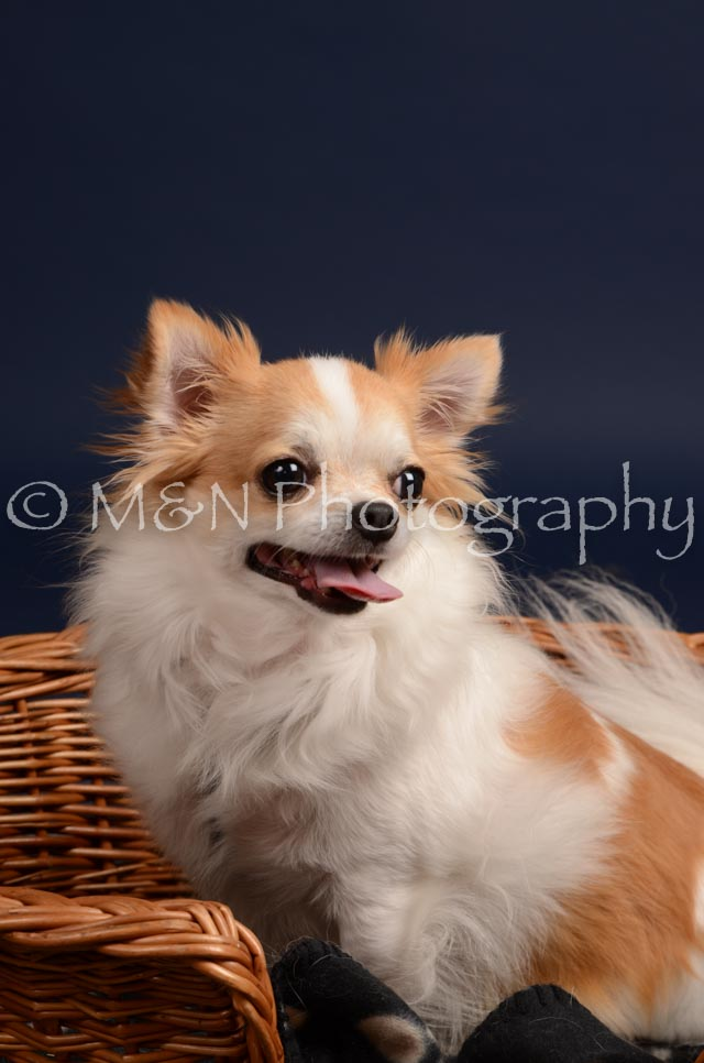 M&N Photography -DSC_0592