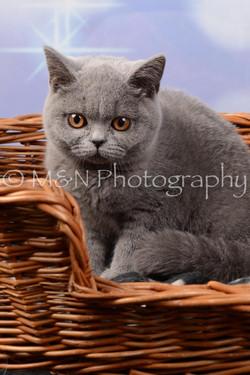 M&N Photography -DSC_7013