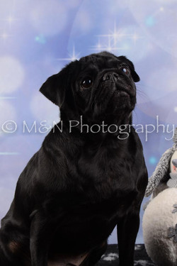 M&N Photography -DSC_6601