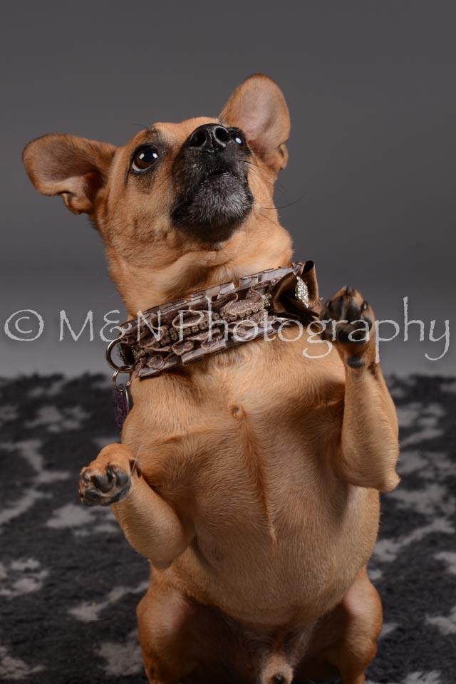 M&N Photography -DSC_2230