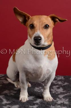 M&N Photography -DSC_3725