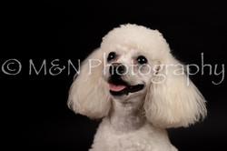 M&N Photography -DSC_9983