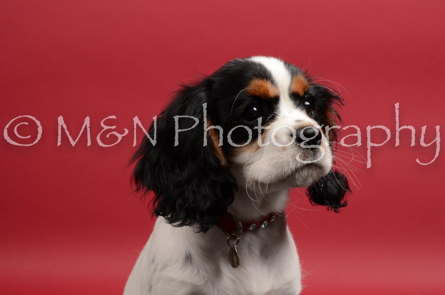 M&N Photography -DSC_8454