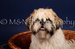M&N Photography -IMG_4650