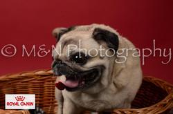 M&N Photography -M&N Photography-DSC_6854