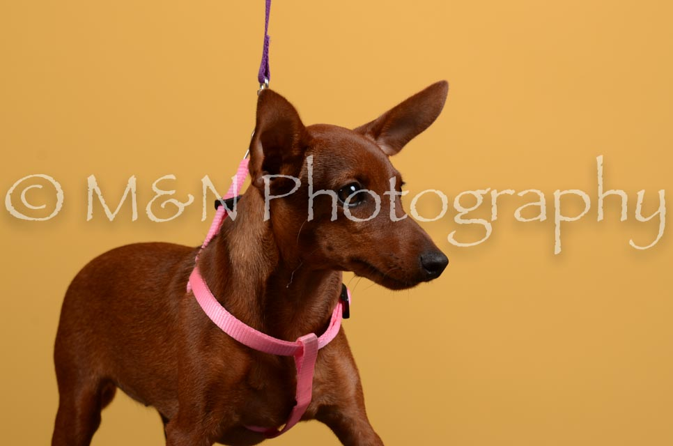 M&N Photography -DSC_4604