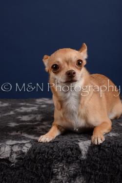 M&N Photography -DSC_4101
