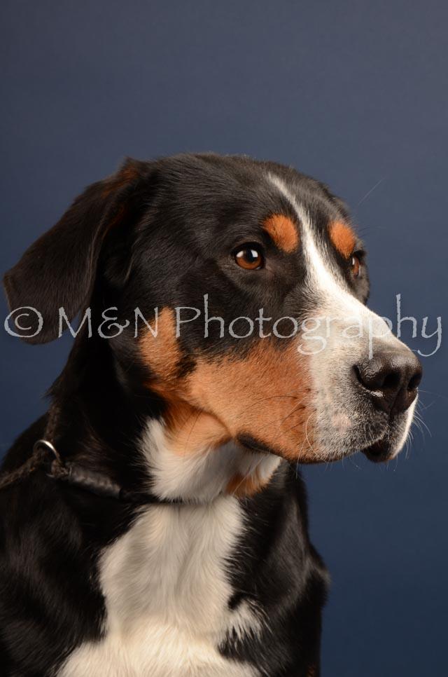 M&N Photography -DSC_4418