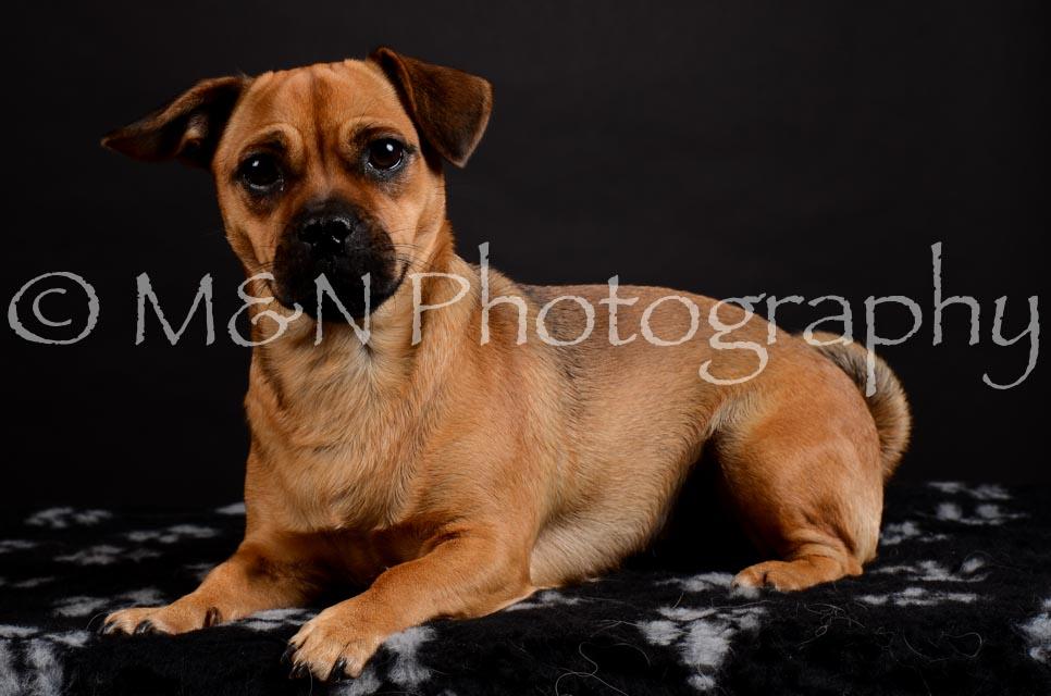 M&N Photography -DSC_5461