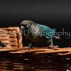 M&N Photography -DSC_2449